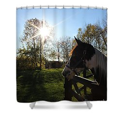 Horse With Sunburst Shower Curtain