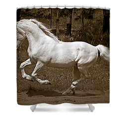 Horsepower Shower Curtain by Wes and Dotty Weber