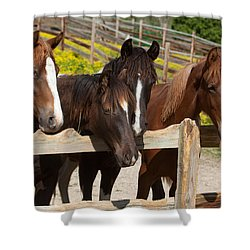Horses Behind A Fence Shower Curtain