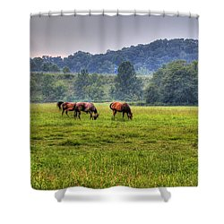 Horses In A Field 2 Shower Curtain by Jonny D