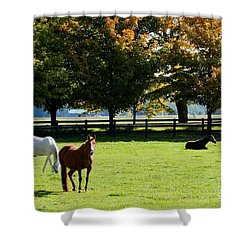 Horses In Fall Shower Curtain