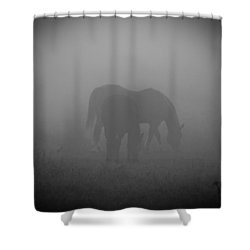 Horses In The Mist. Shower Curtain by Cheryl Baxter