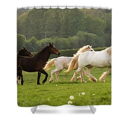 Horses On The Meadow Shower Curtain by Angel  Tarantella