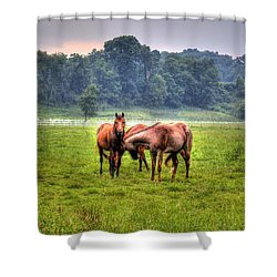 Horses Socialize Shower Curtain by Jonny D