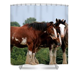 Horsie Huddle Shower Curtain