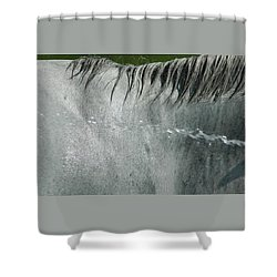 Cooling Down White Horse Shower Curtain by Phil Cardamone