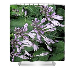 Hosta Ballet Shower Curtain