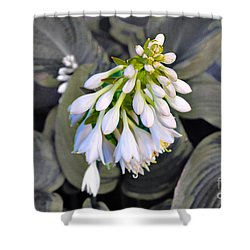 Hosta Ready To Bloom Shower Curtain