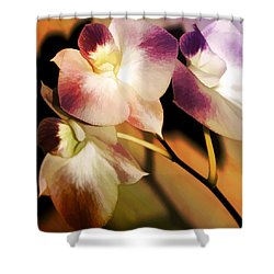 Shower Curtain featuring the photograph Hot Orchid Nights by Holly Kempe