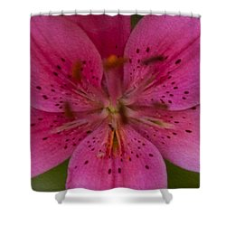 Hot Pink Close Up Shower Curtain by Omaste Witkowski