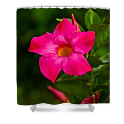 Hot Pink Dipladenia Shower Curtain by Karol Livote