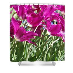 Shower Curtain featuring the photograph Hot Pink Tulips 2 by Allen Beatty
