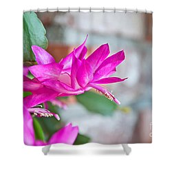 Hot Pink Christmas Cactus Flower Art Prints Shower Curtain
