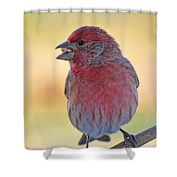 House Finch II Shower Curtain by Debbie Portwood