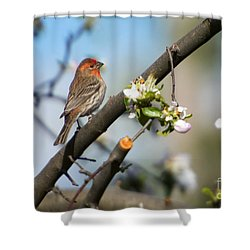 House Finch Shower Curtain by Mike Dawson