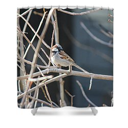 Shower Curtain featuring the photograph House Sparrow by Ann E Robson