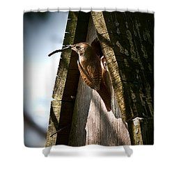 House Wren At Nest Box Shower Curtain