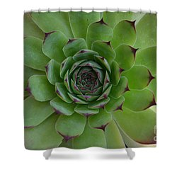 Houseleek Sempervivum Shower Curtain