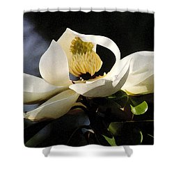 Houston Magnolia Shower Curtain by Robert J Sadler