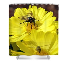 Hoverfly Shower Curtain by Christina Rollo