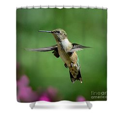 Hovering Hummer Shower Curtain by Amy Porter