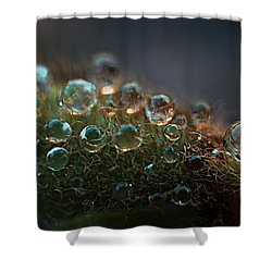 Shower Curtain featuring the photograph How  Bizzahh by Joe Schofield