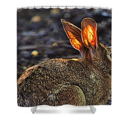 How Bout Them Ears Shower Curtain by Dan Friend
