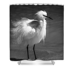 How Do I Look- Bw Shower Curtain