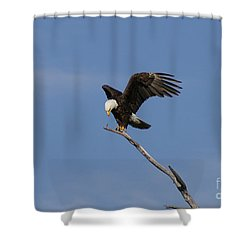 How My Claws Shower Curtain by Lori Tordsen