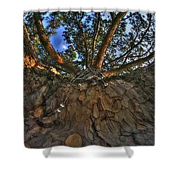 How Sweet It Is Shower Curtain by Michael Frank Jr