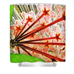 Shower Curtain featuring the photograph Hoya From The Back by John King