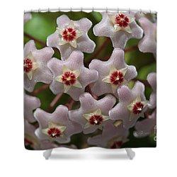 Hoya Waxflower Shower Curtain