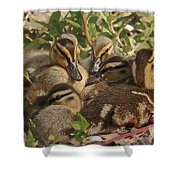 Shower Curtain featuring the photograph Huddled Ducklings by Kate Brown