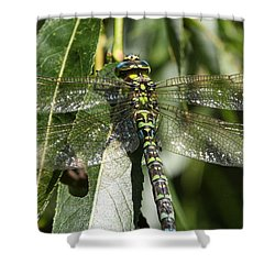 Huge Dragon-fly In Detail. Shower Curtain