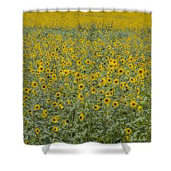 Huge Wild Sunflower Colony Shower Curtain