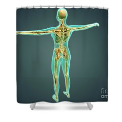 Human Body Showing Skeletal System Shower Curtain by Stocktrek Images