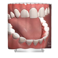 Human Mouth Open, Showing Teeth, Gums Shower Curtain by Stocktrek Images