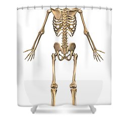 Human Skeletal System, Back View Shower Curtain by Stocktrek Images