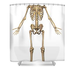 Human Skeletal System, Front View Shower Curtain by Stocktrek Images
