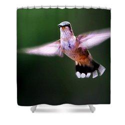 Hummer Ballet 3 Shower Curtain