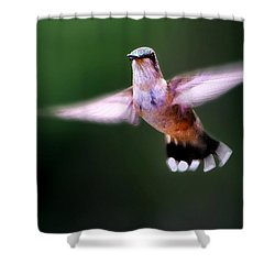 Hummer Ballet 3 Shower Curtain
