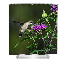 Hummer On Bee Balm Shower Curtain