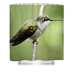 Hummingbird 3 Shower Curtain by Bonfire Photography