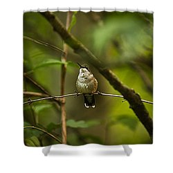 Hummingbird 3 Shower Curtain by Tammy Schneider