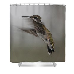 Shower Curtain featuring the photograph Hummingbird 6 by Leticia Latocki