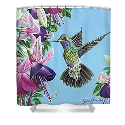 Shower Curtain featuring the painting Hummingbird And Fuchsias by Jane Girardot