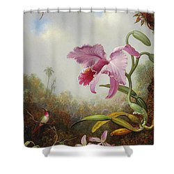 Hummingbird And Two Types Of Orchids Shower Curtain