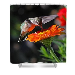 Shower Curtain featuring the photograph Hummingbird And Zinnia by Steve Augustin