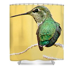 Hummingbird At Rest Shower Curtain by Pamela Patch