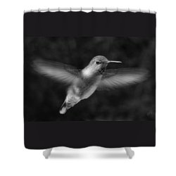 Hummingbird Shower Curtain by Ben and Raisa Gertsberg